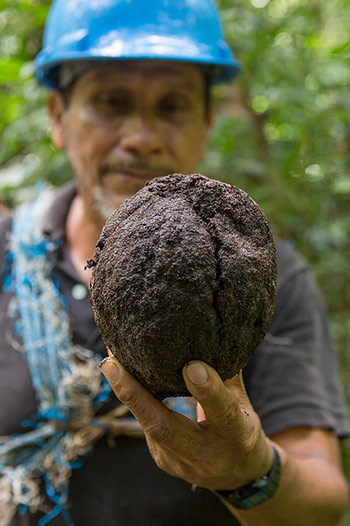 A male-presenting, tan-skinned individual wearing a blue hat holds a coconut while standing in front of trees