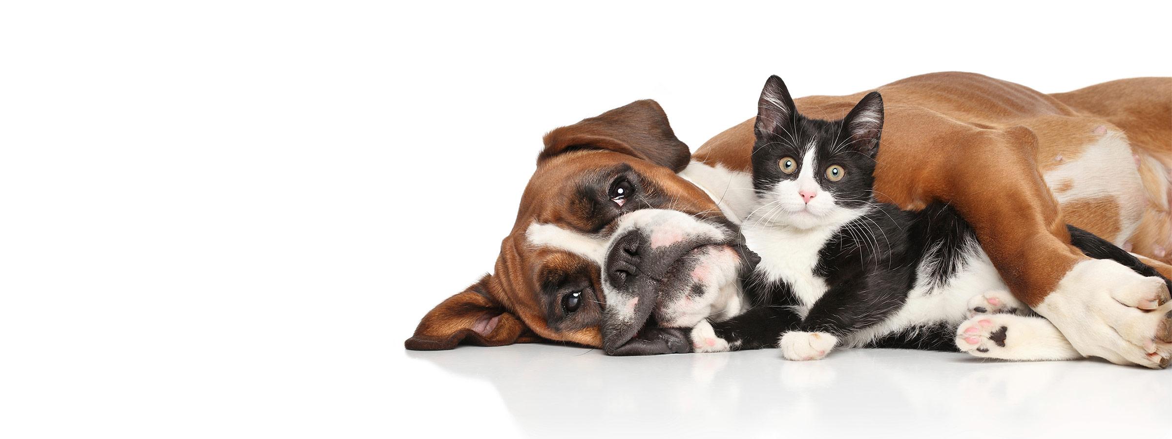 Pet Health | NOW Foods