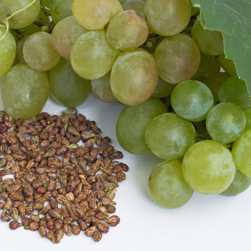 More About Grape Seed Extract