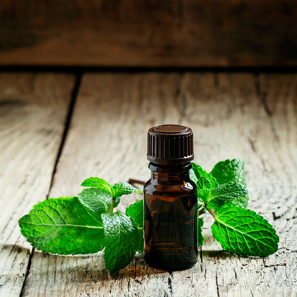 More About Peppermint Oil