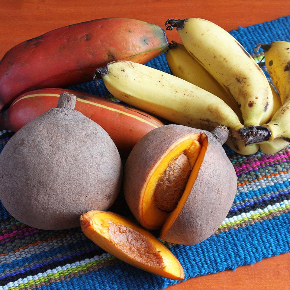 Vitamin B FAQs