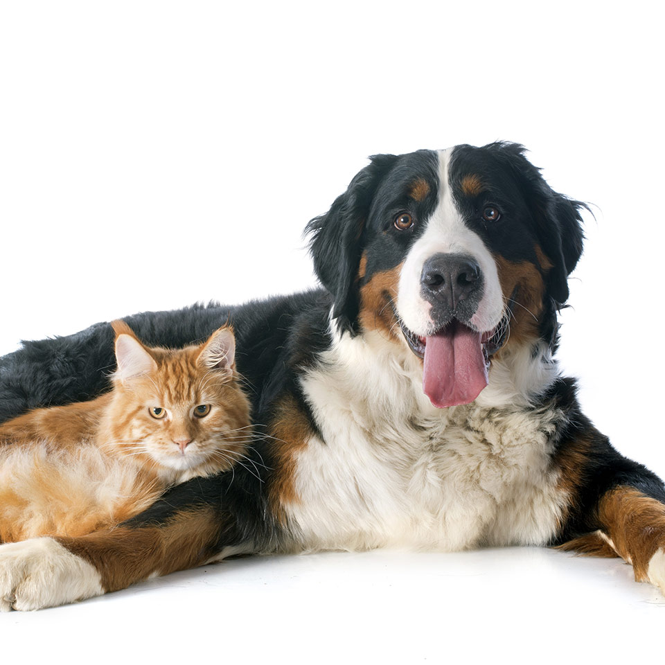 pet relaxant chewables now foods